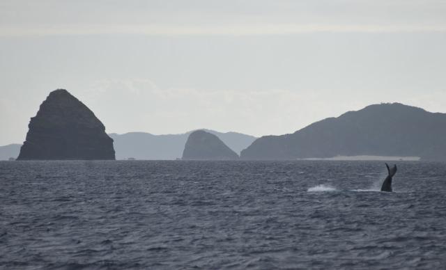 今日26日の鯨の写真