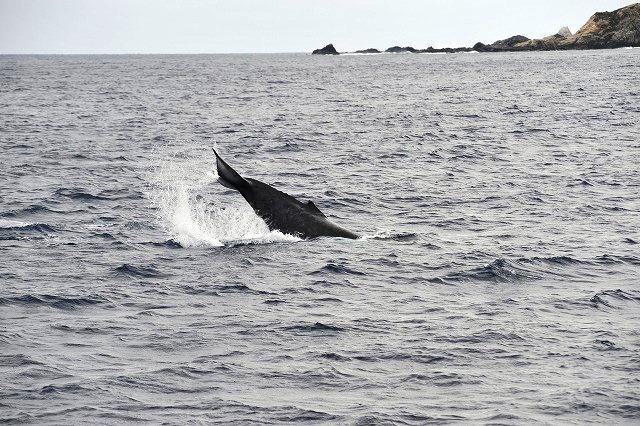 可愛い子クジラ