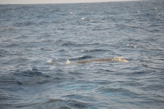 クジラの音楽祭