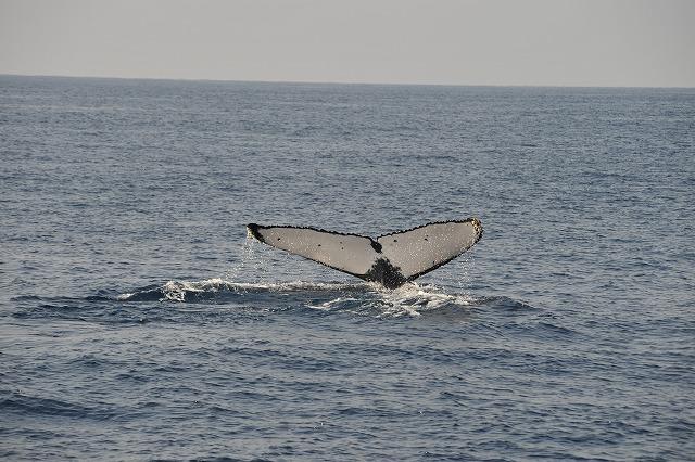 初ペアクジラ