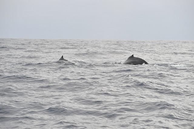 クジラはたくさん!