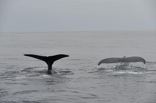 クジラは何頭?