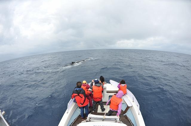 クジラがいない(今だけ)
