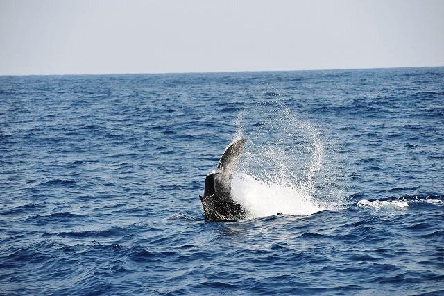 元気な子クジラ