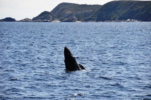 やんちゃな子クジラ