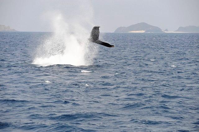 やんちゃな子クジラⅡ