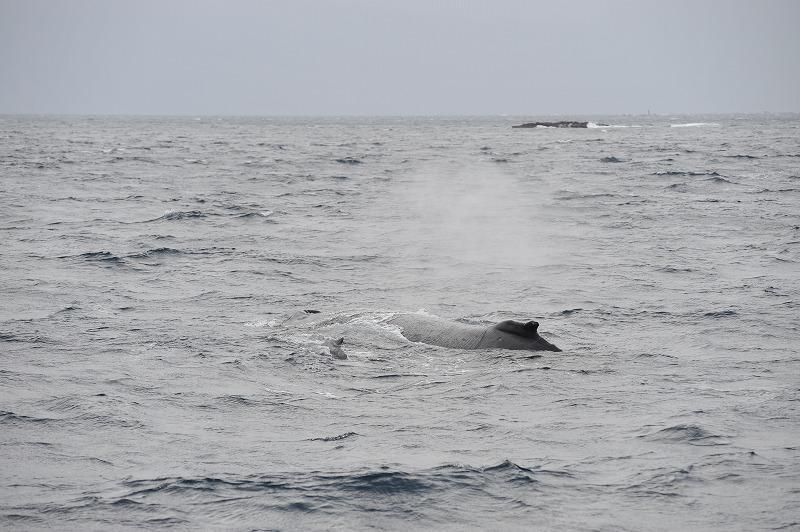 クジラはっけーーーん!