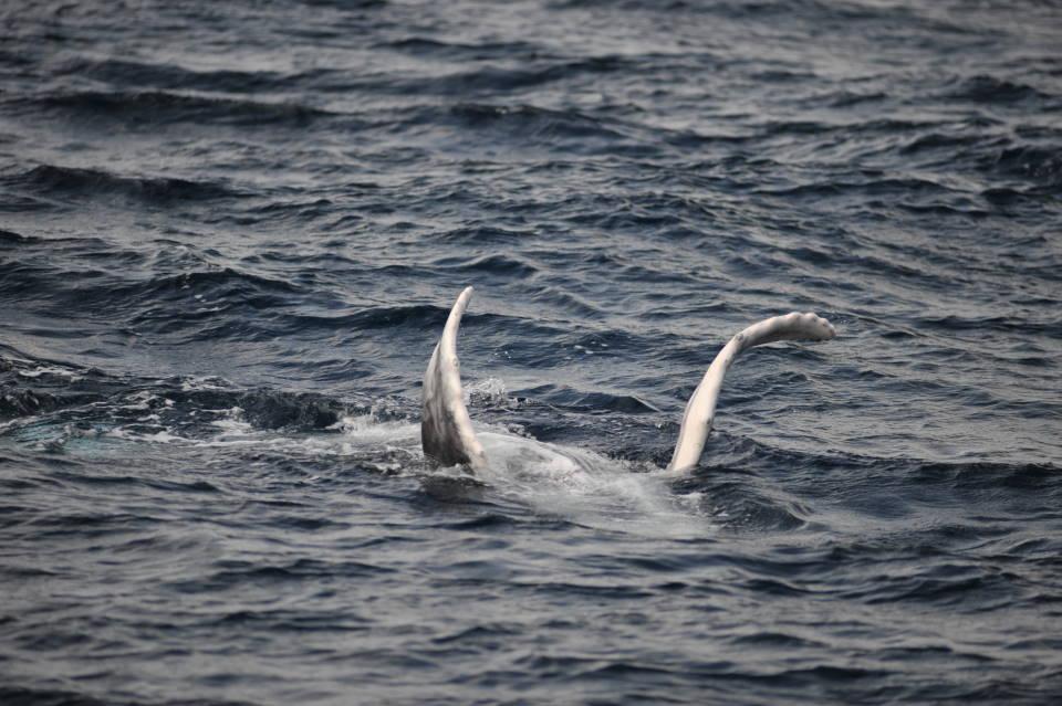 あっちもこっちもクジラ、クジラ。
