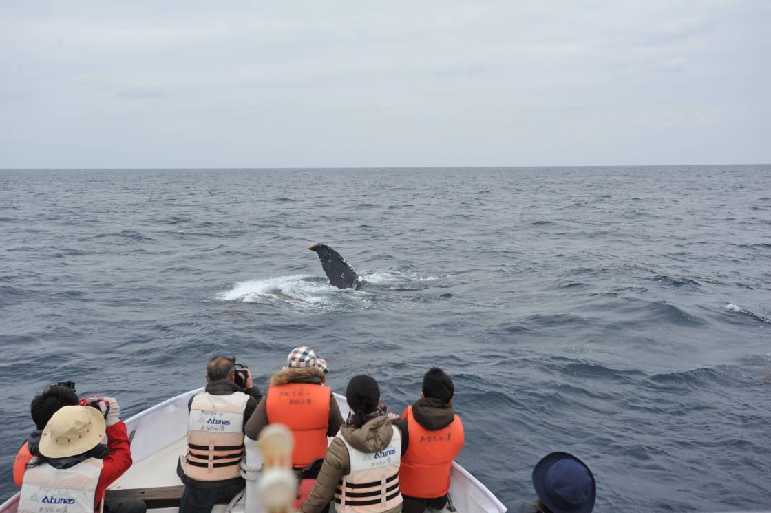 海草とクジラ。