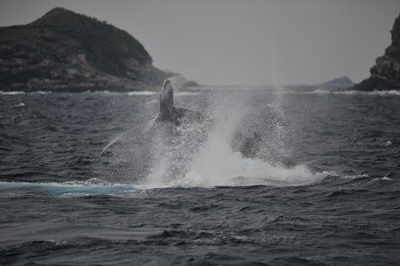 親子クジラアクション祭り。