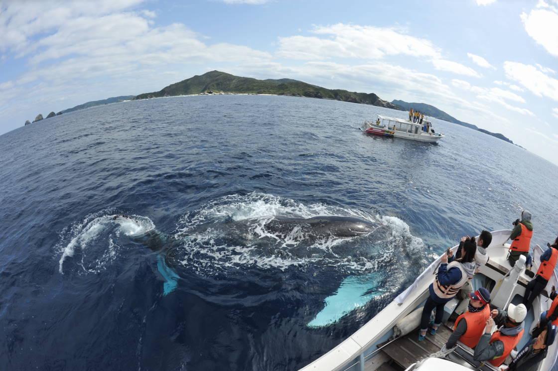 仰向けクジラのたろうちゃん