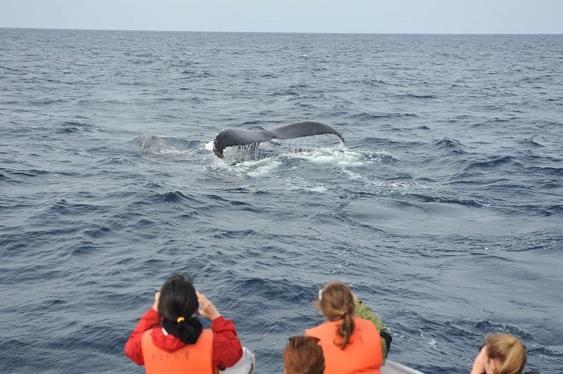 クジラが増えてきた~!