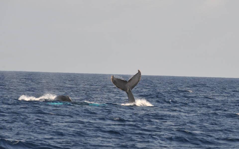 また、あの親子鯨に出会う