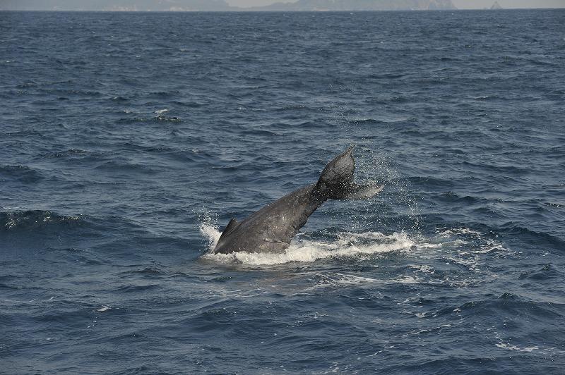 仔クジラワンマンショー。