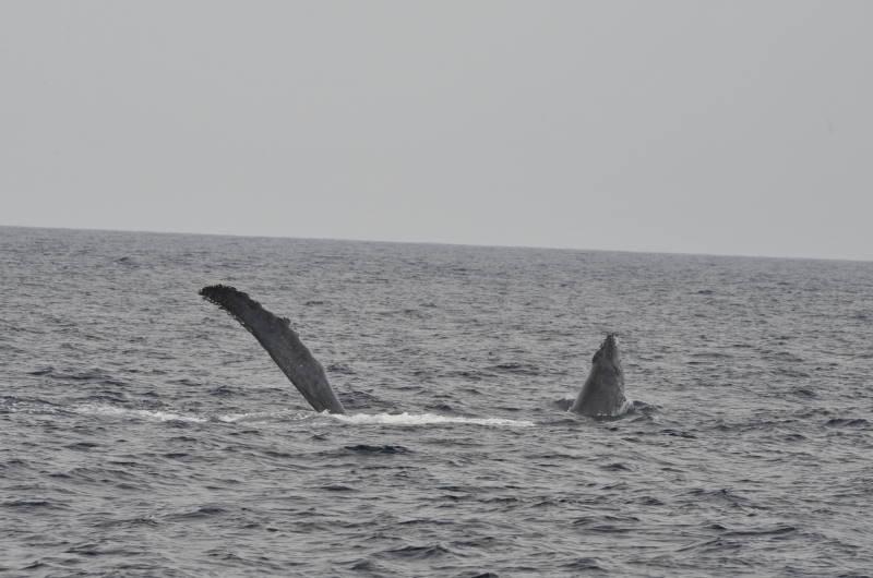 今日も元気な親子クジラ!