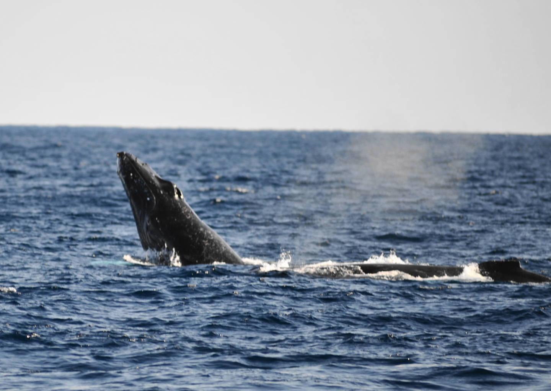 ~本日のクジラ~