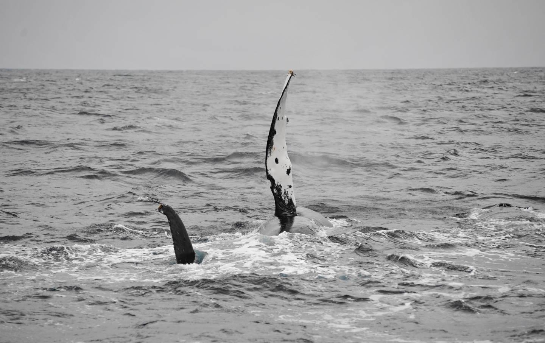 クジラに抱かれたーい…