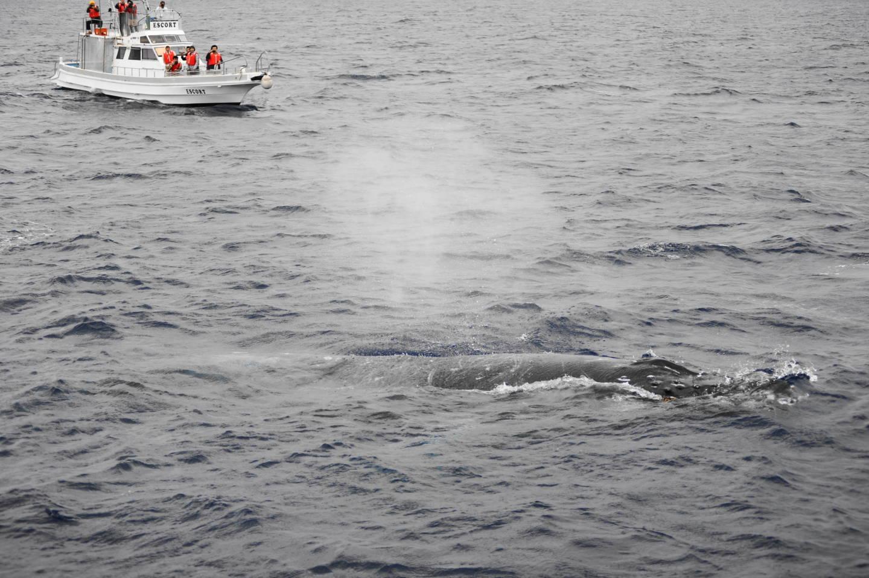 二日ぶりの鯨