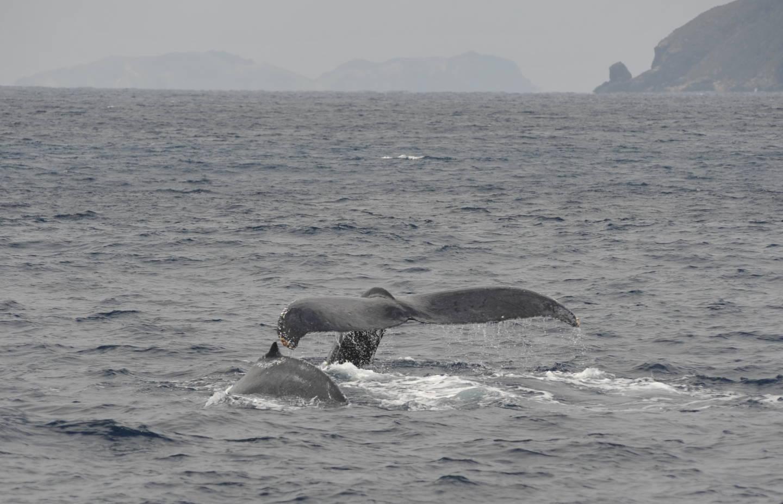 仔クジラが!!!
