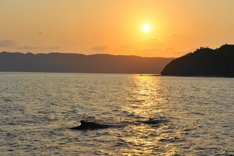 鯨 フィーバー