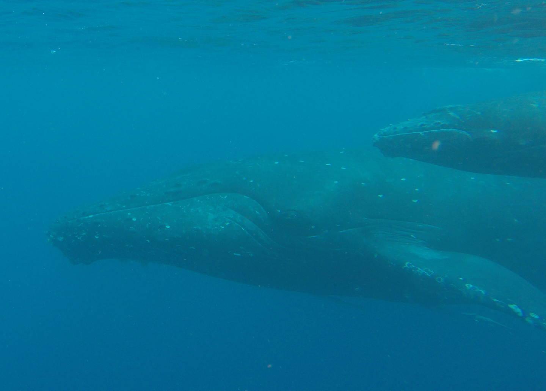 冬の古座間味はクジラが泳いでいる…(笑)