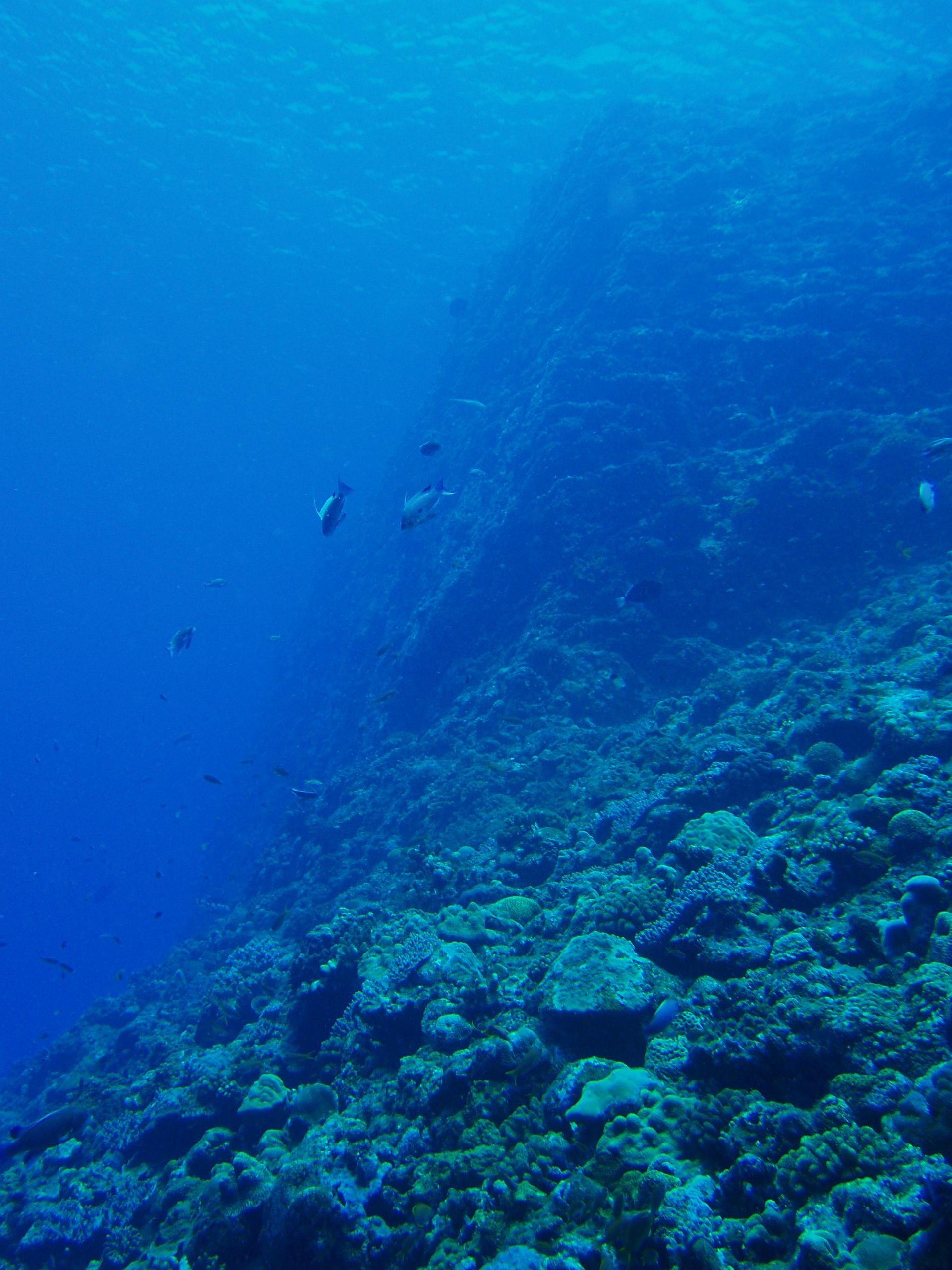 7月26日 ポイント1 金瀬 透明度30m ポイント2 北浜 透明度25m 水温28℃