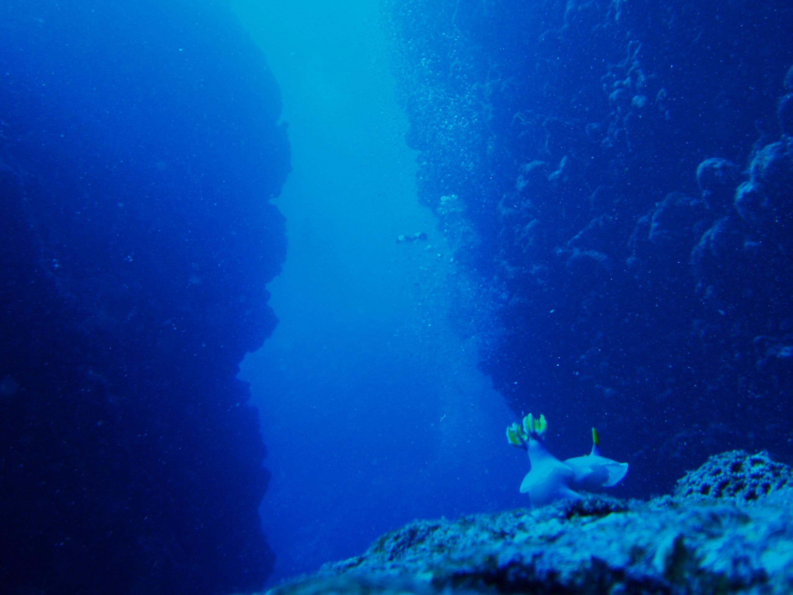 7月31日 ポイント1 ナカチンシ ポイント2 久場キャニオン 水温28℃ 透明度25m〜30m